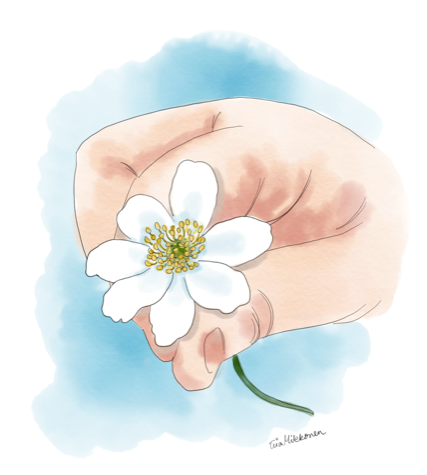 Valkovuokkoa ojentava käsi